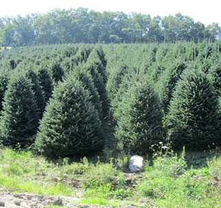 Get Your Christmas Tree From The Knights Of Columbus! The KofC Council  12982 Annual Christmas Tree Sale Starts Friday, Nov 24 And Will Run As Long  As Our ...